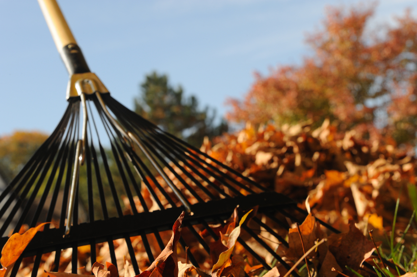 Rake your own leaves