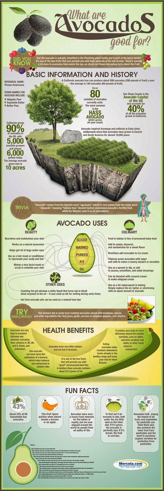 Avocado Uses Health Benefits