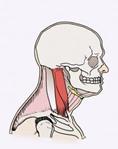 health tip for good posture